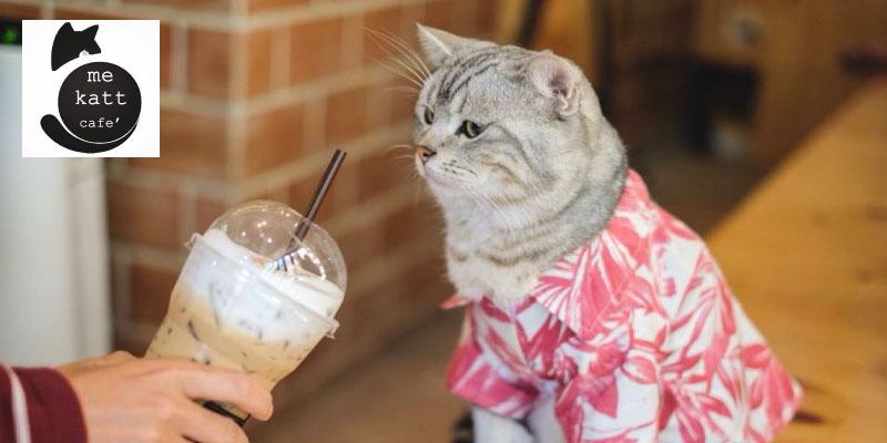 Me Katt Cafe
